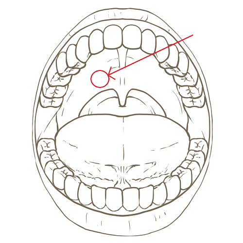 oral_cavity_adult_line_drawing.png